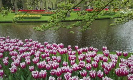 Tulipomania – Quando flores custavam mais que casas